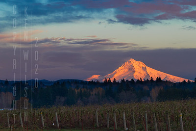 Mt Hood in Alpine Glow