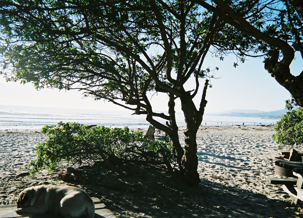 California Beach, 70's, clear, calm - wonderful!  <br /> <br /> Pictures in this gallery from a Fuji Film, $5, one-time use camera.