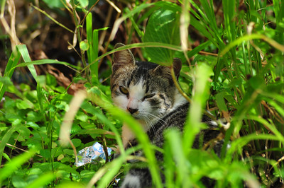 Pussy in the grass!