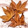 Jan 3, 2013<br /> Fall leaves