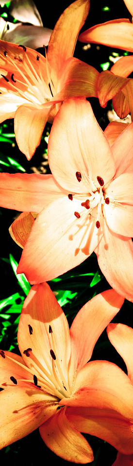 flower_vertical