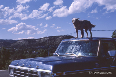 Dog on Roof of Ford Truck, Interstate Near Trinidad, Colorado