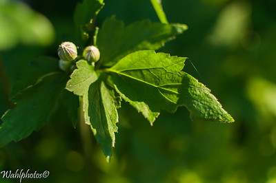 Buds_Flowers_edit-6276