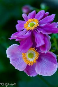 Flowers_2016-6412