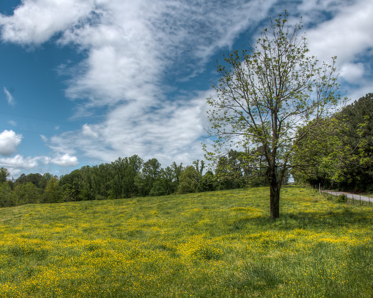 """<h3 style=""""text-align: left;""""><strong>Today's Photo: May Flowers</strong></h3> April showers truly do bring May flowers.  I took this on May 5.  Just a few days ago, this field did not hold a single flower.  In the span of a few days, and several inches of rain, these sprouted.  Now it is time to go search for some more.  - Daryl Clark  Read more at the <a href=""""http://justshootingmemories.com"""">Daily Photography Blog</a> Just Shooting Memories!..."""