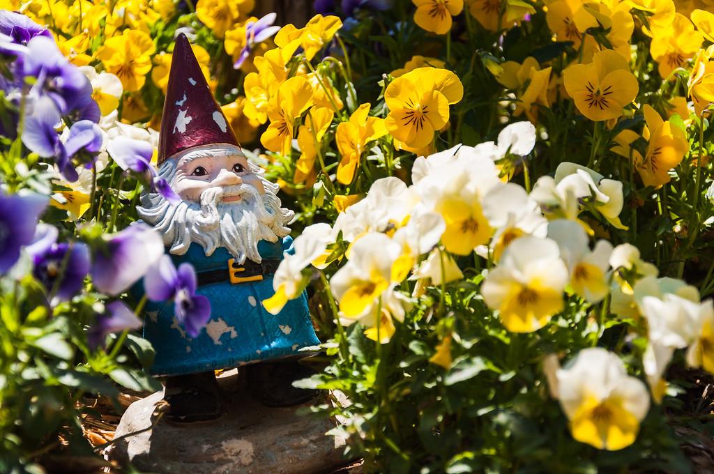 A Roaming Gnome