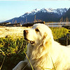 "Squash..aka ""TheBeachMaster""......this was down on our beach in Haines...Pyramid Island out in the background and the Chiklkat Range of upper Lynn Canal"