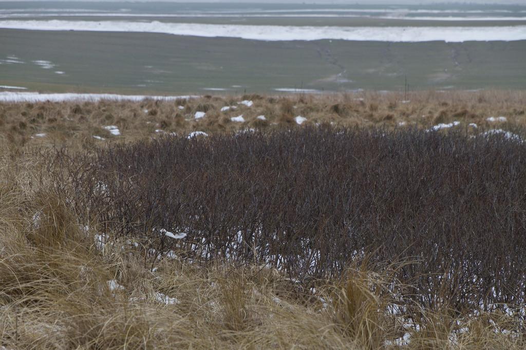Trans/Bovbjerg. Feb 27 @ 13:16<br /> ... looking inland i.e. eastward