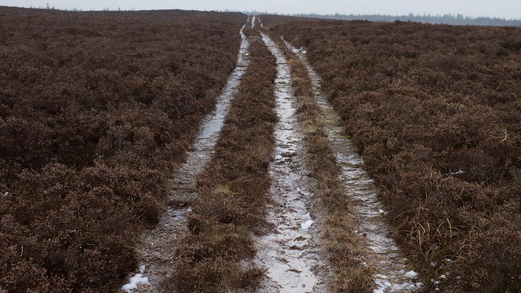 Klosterhede plantage, Struer/Lemvig. February 27 @ 13:33