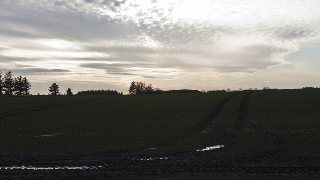 Klosterhede plantage, Struer/Lemvig. March 25 @ 17:35