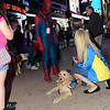 Wednesday, May 8 2013 - K-9 Comfort Dogs Meet and Greet the people of New York while in town for being honored on Good Morning America.