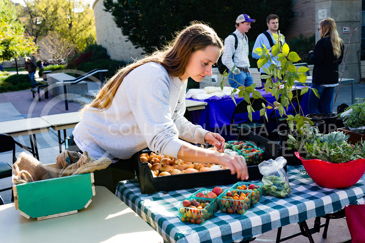 Erin Bailey sorts produce at the Willow Lake Student Farm table at the K-State Farmers Market on 25th October, 2017 (Alex Shaw | Collegian Media Group)