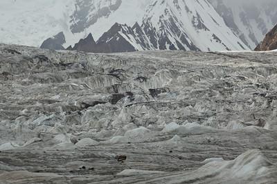 The Savoia Glacier meeting Godwin Austen.