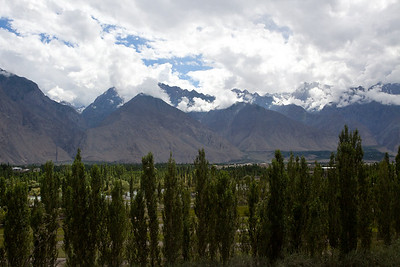 Poplar trees as we drive into Skardu town.