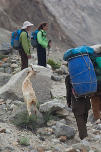 """Our goat, """"Dinner"""", eats along the way as Asif leads it pas Linda and Anisa."""