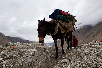 In addition to 32 porters we had three ponies and two mules.  Each can carry the load of two porters.  It is very difficult terrain for the animals and you would come across carcasses along the route.  The minders are contantly adjusting the load on the animals so they don't get unbalanced.