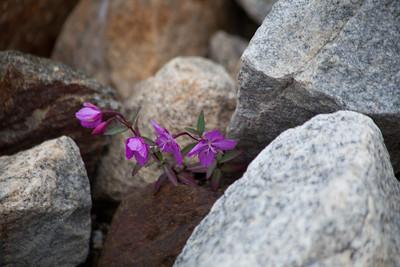 Wildflowers in the rocks.