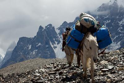 """Baraf"", the pony nicknamed snow in urdu strolls by."