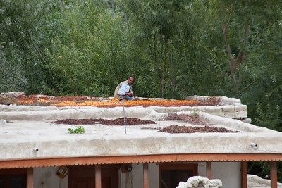 Apricots on the roofs.  The nuts are greatly sought after for facial cream.