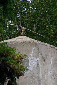 Leaving the PTDC Motel for the airport, spotted this yak scull on the top of the water tower.  Not quite sure what it was doing there.