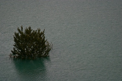 Rising waters from the dam are submerging the trees.
