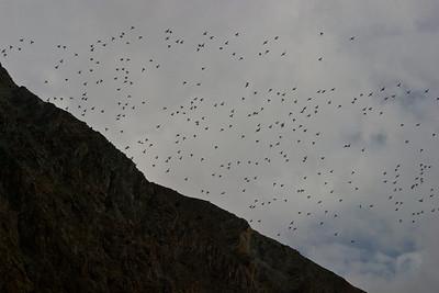 Lots of ducks.