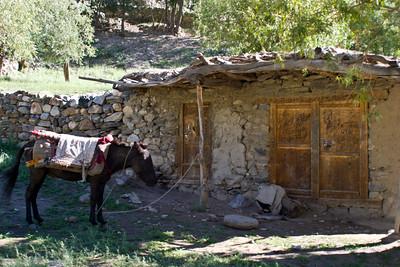 A home and a pony outside.