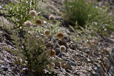 There are a number of flowers that line the path, including these weird ball things.