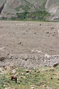 Horses graze on the land outside Askoli.