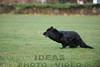CAT 11-16 Morning-330