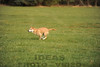 CAT 11-16 Morning-175