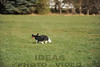 CAT 11-16 Morning-451