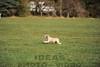 CAT 11-16 Morning-438