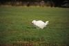 CAT 11-16 Morning-245