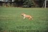 CAT 11-16 Morning-309