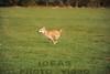 CAT 11-16 Morning-174