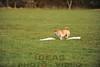 CAT 11-16 Morning-171