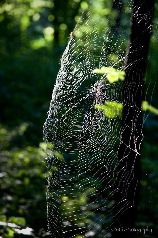 Spider web in Kansas