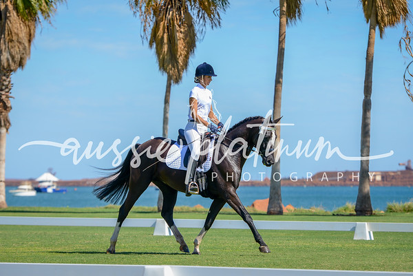 KARC Dressage & Working Horse By the Ocean