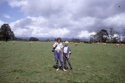 © RobAng 1989, New Zealand by bicycle, Inglewood, 20.2.89