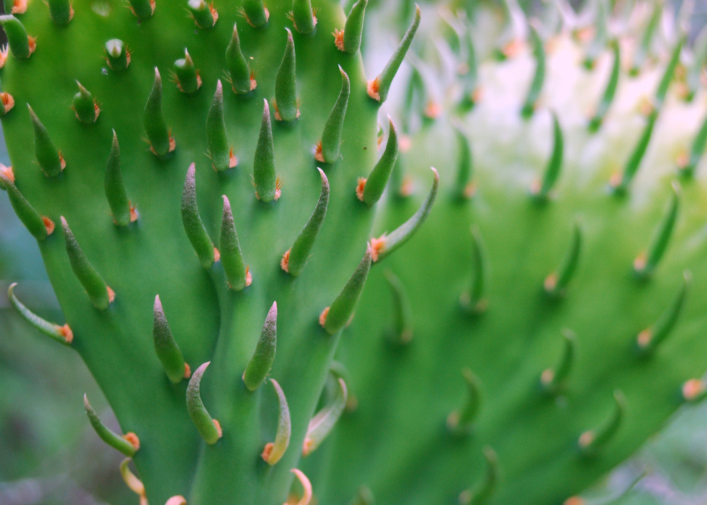 Cacti up close