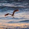 20150529-052915-bird caught fish