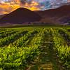edna valley vineyard-3698-blended