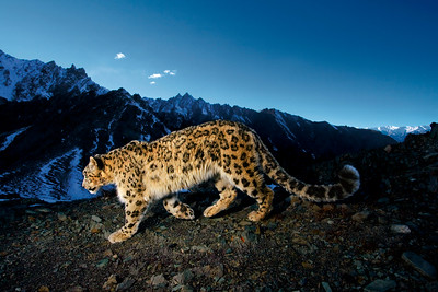 "National Geographic Live! Steve Winter - ""On the Trail of Big Cats"""