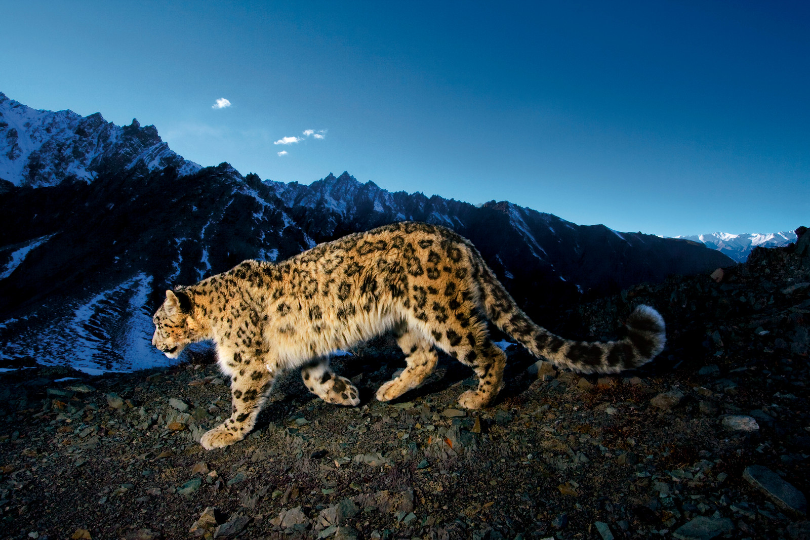 """National Geographic Live! Steve Winter - """"On the Trail of Big Cats"""""""