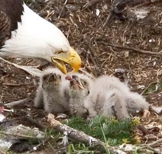 008-eagle 03