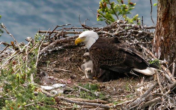 010-eagle 06