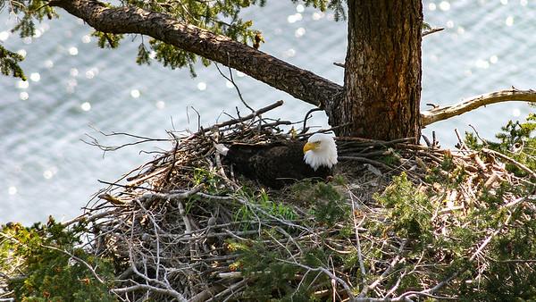 001-b mom on nest