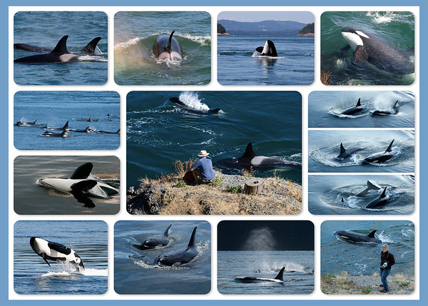 Galiano Orcas Collage