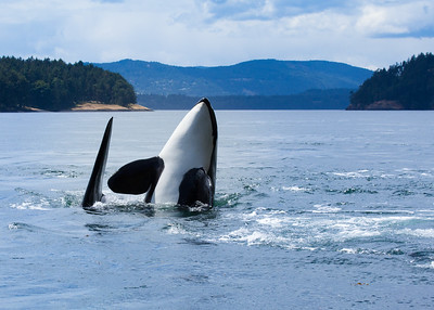Orca UP